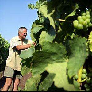Wijngaard de Linie